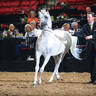2012 AHBA Stallion Showcase