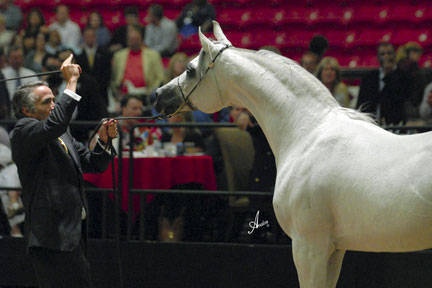 2008 Arabian Breeders World Cup Gallery