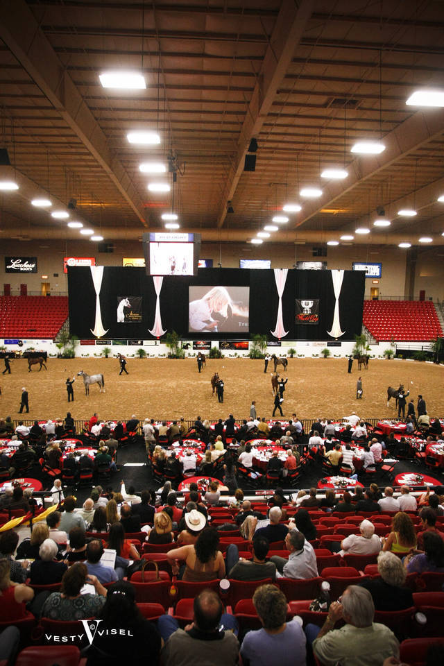 2009 Arabian Breeders World Cup Gallery