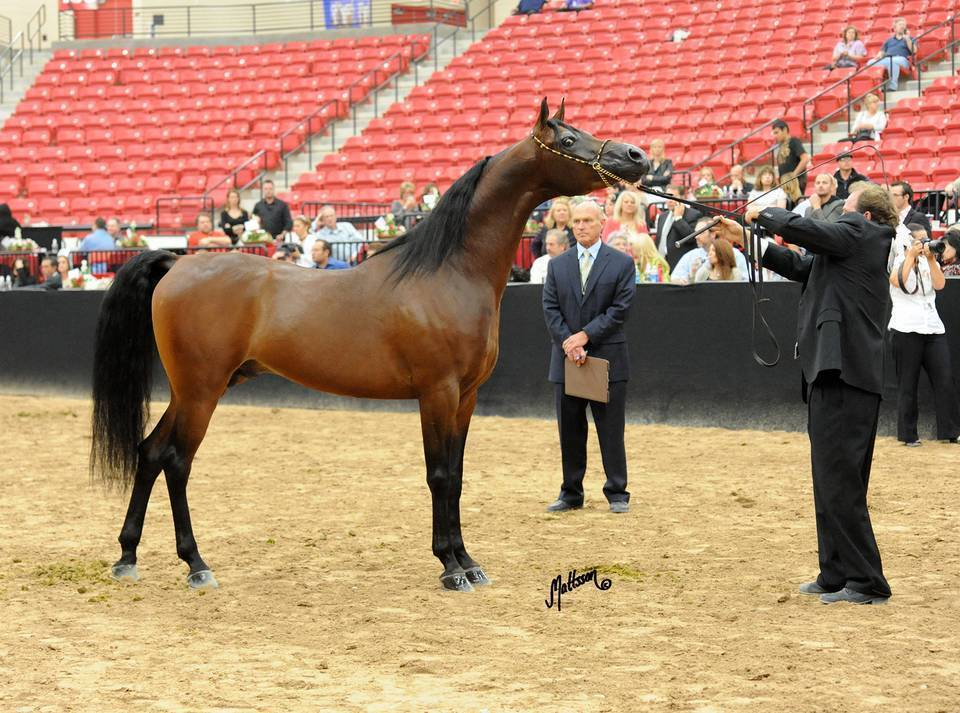 2011 Arabian Breeders World Cup Gallery