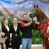 ABWC Stallion/Colt ATH Supreme Silver Champion - Heir of Marwan