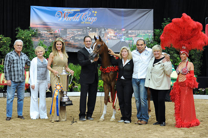ABWC Stallion/Colt ATH Supreme Gold Champion - Kwest For Fire