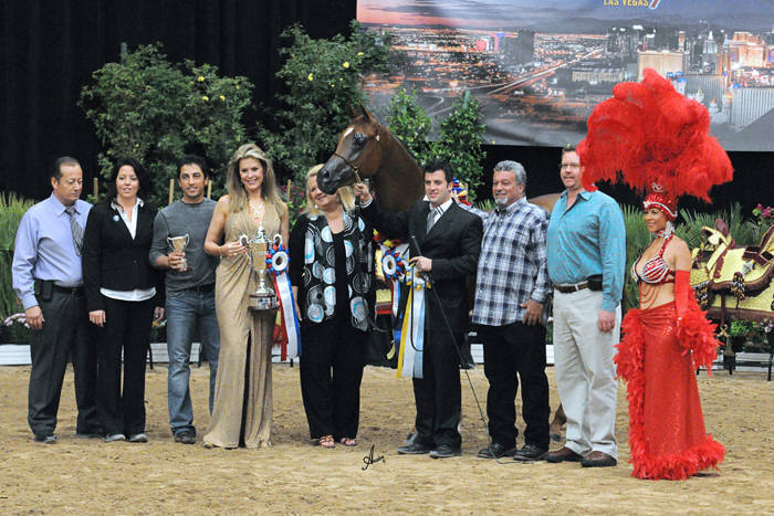 AHBA Futurity Two Year Old Colts/Geldings ATH Gold Champion - Rahfayel