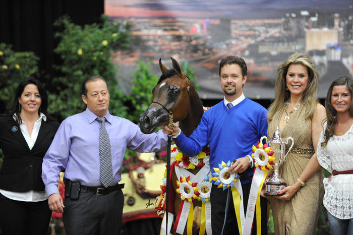 AHBA Futurity Yearling Filly Silver Champion - Ajadore