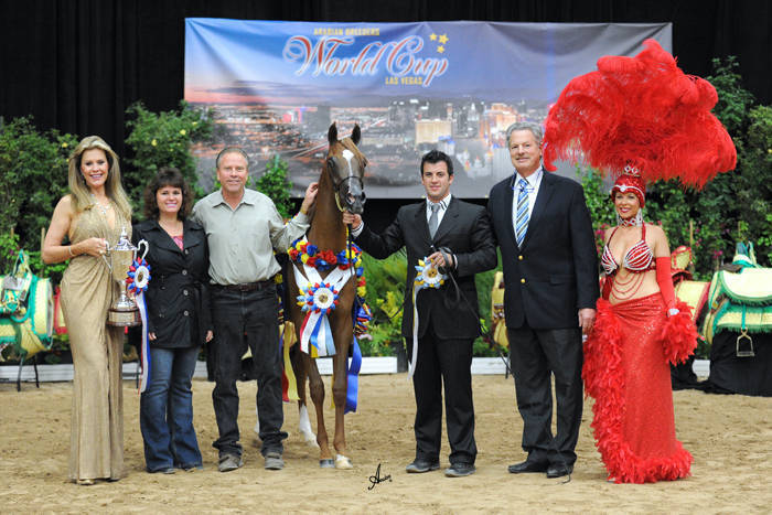 AHBA Futurity Yearling Filly Gold Champion - TA Miss Honey Bee