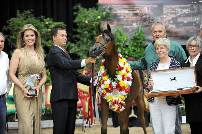 ABWC Yearling Filly Supreme Silver Champion - Evening Song IA
