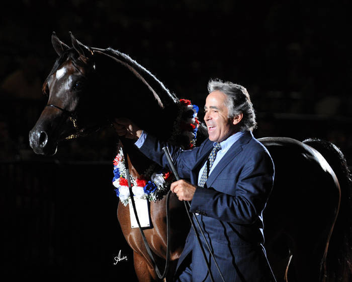 ABWC Junior Stallion Supreme Silver Champion - Francessco