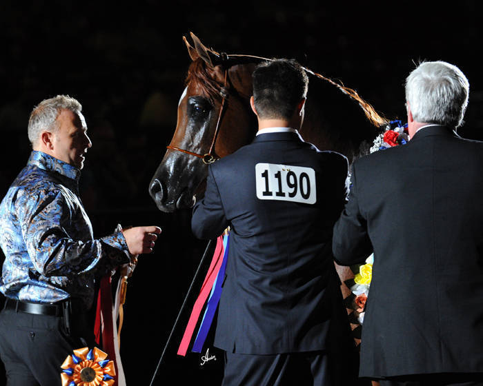 ABWC Junior Stallion Supreme Bronze Champion - Freedom PA
