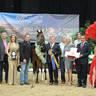 ABWC Senior Mare Supreme Bronze Champion - JJ La Baronesa