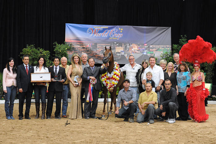 ABWC Senior Stallion Supreme Silver Champion - Apalo