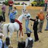 2012 Stallion Showcase - El Nabila B
