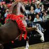 2012 Stallion Showcase - Enzo