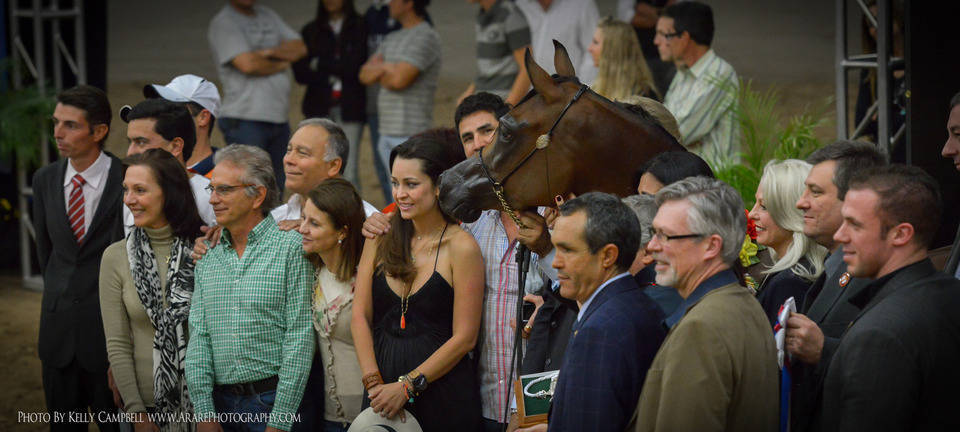 2013 Arabian Breeders World Cup Gallery