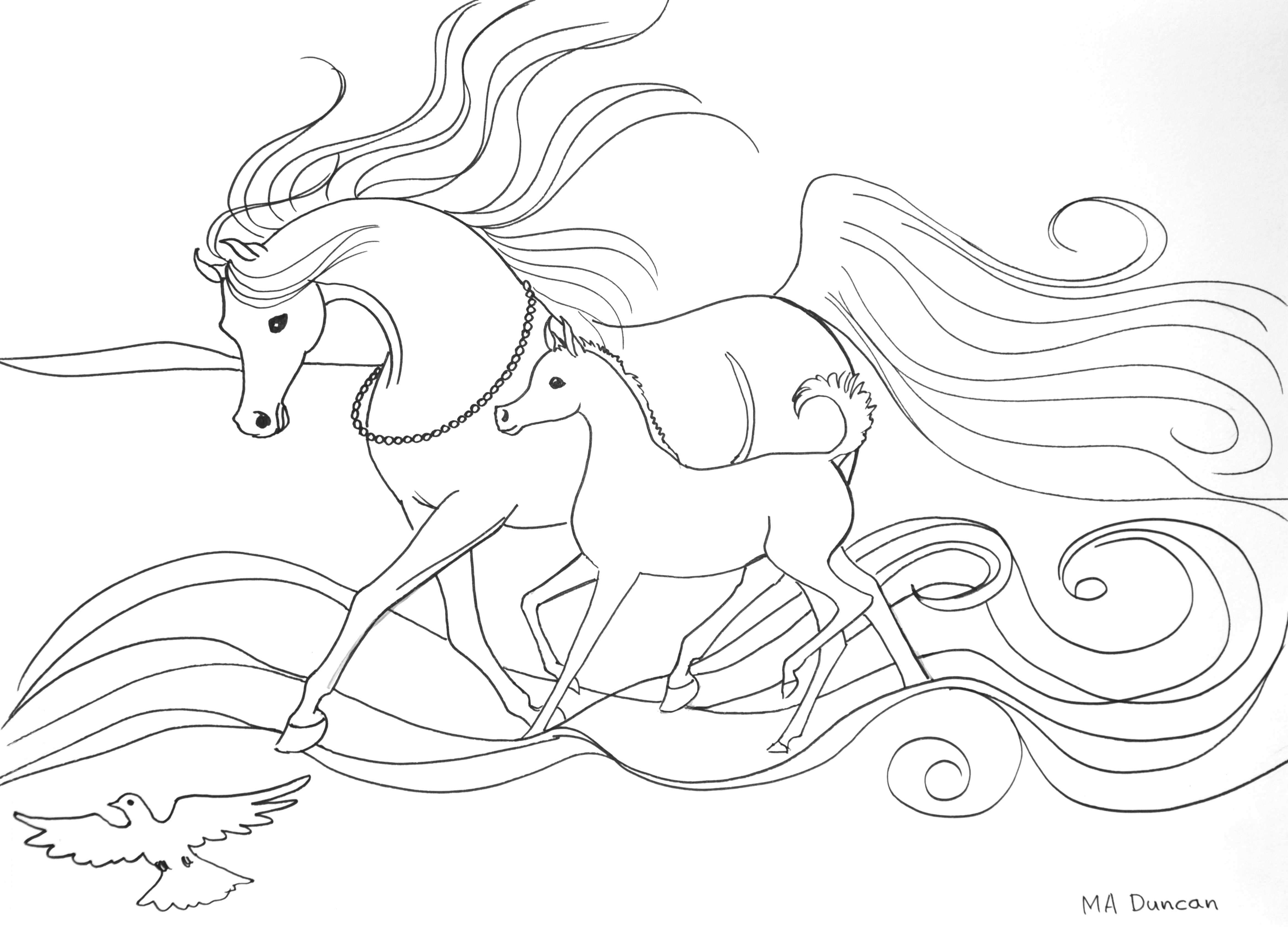 youth colouring in contest australian arabian national