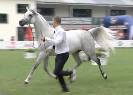 Polish National Show 2016 Class 8a