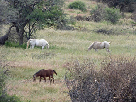 African Horse Sickness — Could It Be Our Next West Nile?