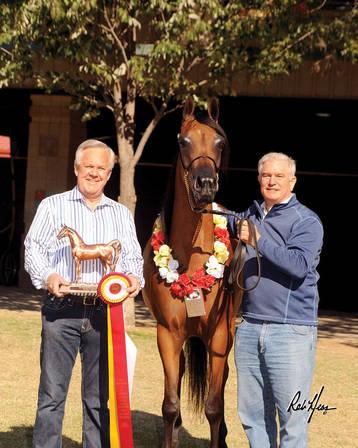 Small Breeders, Big Results: GRK Arabians