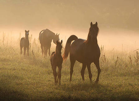 Stud Farm Diaries: A Very Curious Case, Plus Answers to Common Foaling Questions