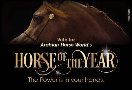 Vote for AHW's Horse of the Year