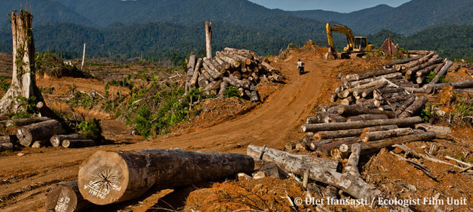 Deforestation of Sumatra's forests. Image courtesy of Elephant Family (all rights reserved)