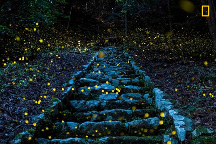 Honorable Mention: Forest of the Fairy by Yutaka Takafuji
