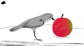 Bird eating an apple🐤