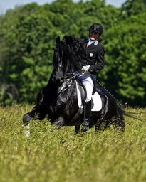 Casper van de Oostwal approved as KFPS Breeding Stallion !