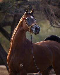 Goddess of DaVinci named Rs Senior Champion Mare @ Scottsdale