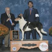 WD/BOW major Mystic Tir Nan' Og Criminal Intent with judge James Maloney @ the Mattoon Kennel Club Oct 18, 2013