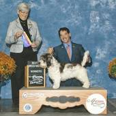 WD/BOB over Specials major Envieux's Twist Of Fate with judge Anne Katona @ the Mattoon Kennel Club show Oct 18, 2013