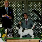 WD/BOB over Specials judge Bill Shelton @ the Bloomington Indiana Kennel Club April 18, 2014 – New Ch. Envieux's Twist Of Fate