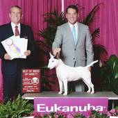 WB/BOW/BOB over Specials major Bright Star of Bully Lake with judge Dana Cline @ AKC Eukanuba National Championship show December 12, 2015