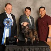 6-9 month Puppy Dog 1st Fuhrer Of Secutor with Breeder Judge Robin Stansell @ the 2016 FBDCA National Specialty October 20, 2016