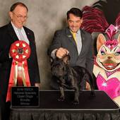 Open Brindle Dogs 2nd Cacique Of Villa Gloria with Breeder Judge Robin Stansell @ the 2016 FBDCA National Specialty October 20, 2016