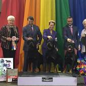 Stud Dog Class 1st GCH Ch Chancellor Flirt's Hi Flying' Gladiator & his get with judge Betty Leininger @ the 2016 ARC National Specialty May 14, 2016