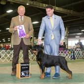 WB major Esmonds Dreamsicle with judge Clay Coady @ the Evansville Kennel Club show March 19, 2016
