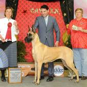 Group 2nd GCHB Ch Journey's Jewel with judge Mrs Joan P Anslem @ the South Arkansas Kennel Club show February 28, 2016