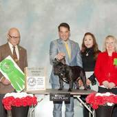 Award of Merit GCH Ch Coco Vialatte Last Samurai with judge Edd E Bivin @ the French Bulldog Club of America Independent Specialty Feb 13, 2016