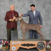 BOB Ch Silogram's Holiday Rush At Tripawd with judge Norman L Patton @ the St Joseph Kennel Club show February 7, 2016