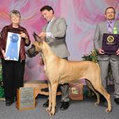Group 1st GCHB Ch Journey's Jewel with judge Mrs. Doris Cozart @ the Alexandria Kennel Club show January 31, 2016