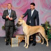 WD/BOW/BOS major over Specials from the 6-9 month Puppy class Moonriver's El Patron with judge Dana Cline @ the Baton Rouge Kennel Club show January 28, 2016