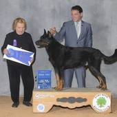 Herding Group 1st GCHB Ch Gabek Eamon Du Chateau with judge Mrs P D Smith @ the Fort Bend Kennel Club on January 24, 2016