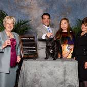 Award Of Merit GCH Ch Coco Vialatte Last Samurai with judge Mrs. Janice G Pardue @ the FBDCA 2015 National Specialty October 2015