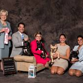 Wining the Brood Bitch Class – FBCA National Specialty Oct 2015 – Ch Robobull Goldshield Justadream & her progeny – Goldshield's Dream On, Goldshield's Catch A Dream De La Rive Gauche & Ch Goldshield's Dream A Little Dream Of Me