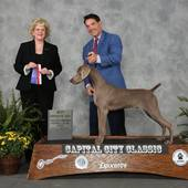 WD/BOW/BOS from the 6-9 Puppy Class with judge Mrs Vicki L Abbott @ the Greater Emporia Kennel Club show August 17, 2015