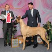 Group 2nd GCHB Ch Journey's Jewel with judge Dana Cline @ the Baton Rouge Kennel Club show January 28, 2016