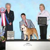 Best In Show GCH Ch General Sherman Tank VII with judge Mrs. Beth Speich @ the Belle-City Kennel Club show March 5, 2016