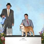 Group 1 GCH Ch General Sherman Tank VII with judge Arley D Hussin @ the Belle-City Kennel Club show March 5, 2016