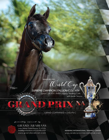 Grand Prix NA - Success at the 2019 Arabian Breeders World Cup