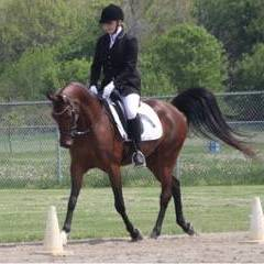 GA Grand First Lady competing in Hunt Seat & Dressage Hunter Pleasure